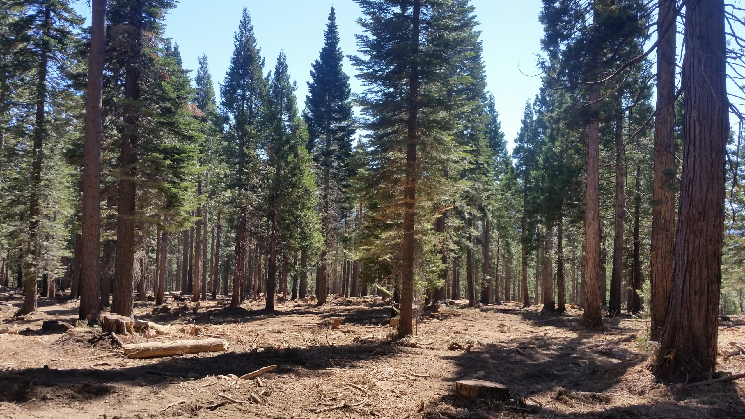 Thinning at French Meadows